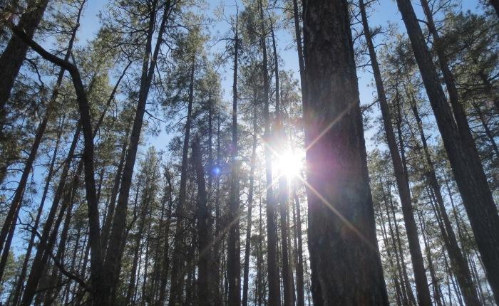 Goldwater Lake Trail#396